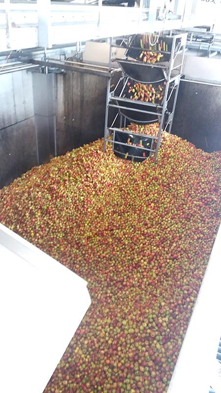 Fruchtsafthersteller Pfanner Lauterach